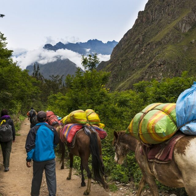 Sacred Valley, Peru - January 1, 2014: People and horses carrying goods along the Inca Trail, in the Sacred Valley, Peru